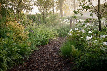 Trädgårdsdesign skogsträdgård